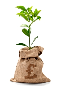 Money Tree + Money Bag With Pounds d